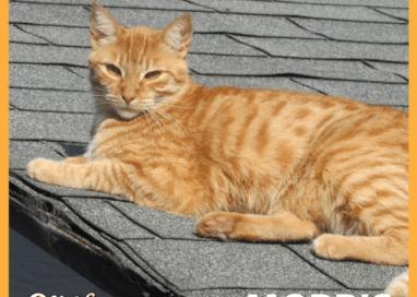 Morris the Cat on Grooming
