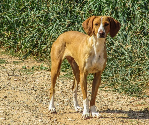 What to Do If You See a Stray or Injured Dog