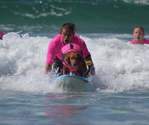 Surfing Dogs & Vets with PTSD help disabled children catch waves