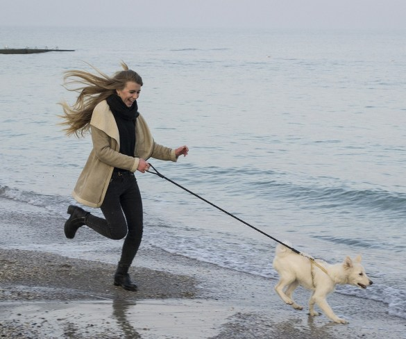 Safety Tips for Jogging with Your Dog