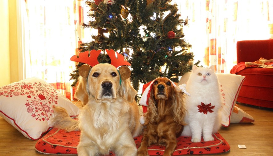 Reduce Dog Chewing During the Holiday Season