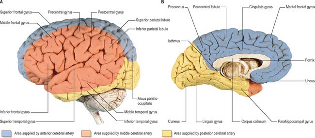 Vascular supply and drainage of the brain Basicmedical Key