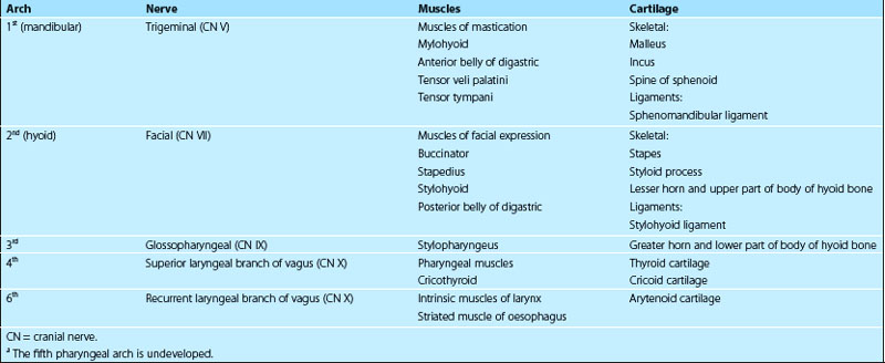 Development of the head and neck, the eye and ear Basicmedical Key