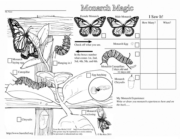 √ Monarch Butterfly Life Cycle Coloring Page