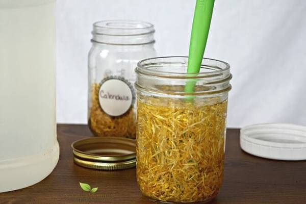 Herbal-glycerites-are-a-wonderful-and-beneficial-way-to-infuse-herbs-and-add-them-into-your-next-DIY-projects.-Come-learn-how-over-at-Scratch-Mommy