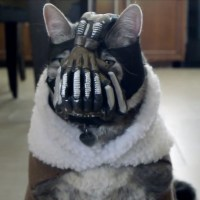 BaneCat returns in sequel to viral video