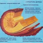 структура-дерева