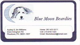 Email: Blumobeard@gmail.com