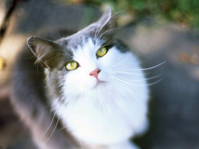 Iphone 4 Wallpapers Hd 3d Beautiful Cats Images Beautiful Cool Wallpapers
