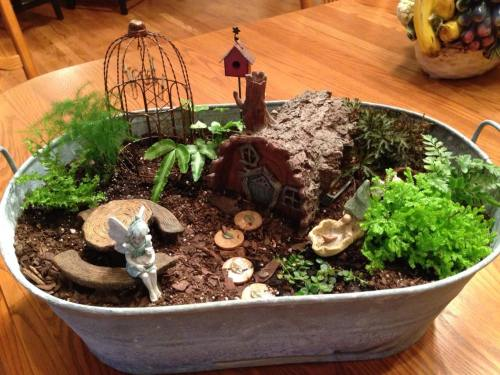 Medium Of Succulent Fairy Gardens