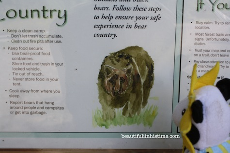 11 cow bear safety