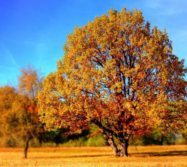 tree-99852_960_720