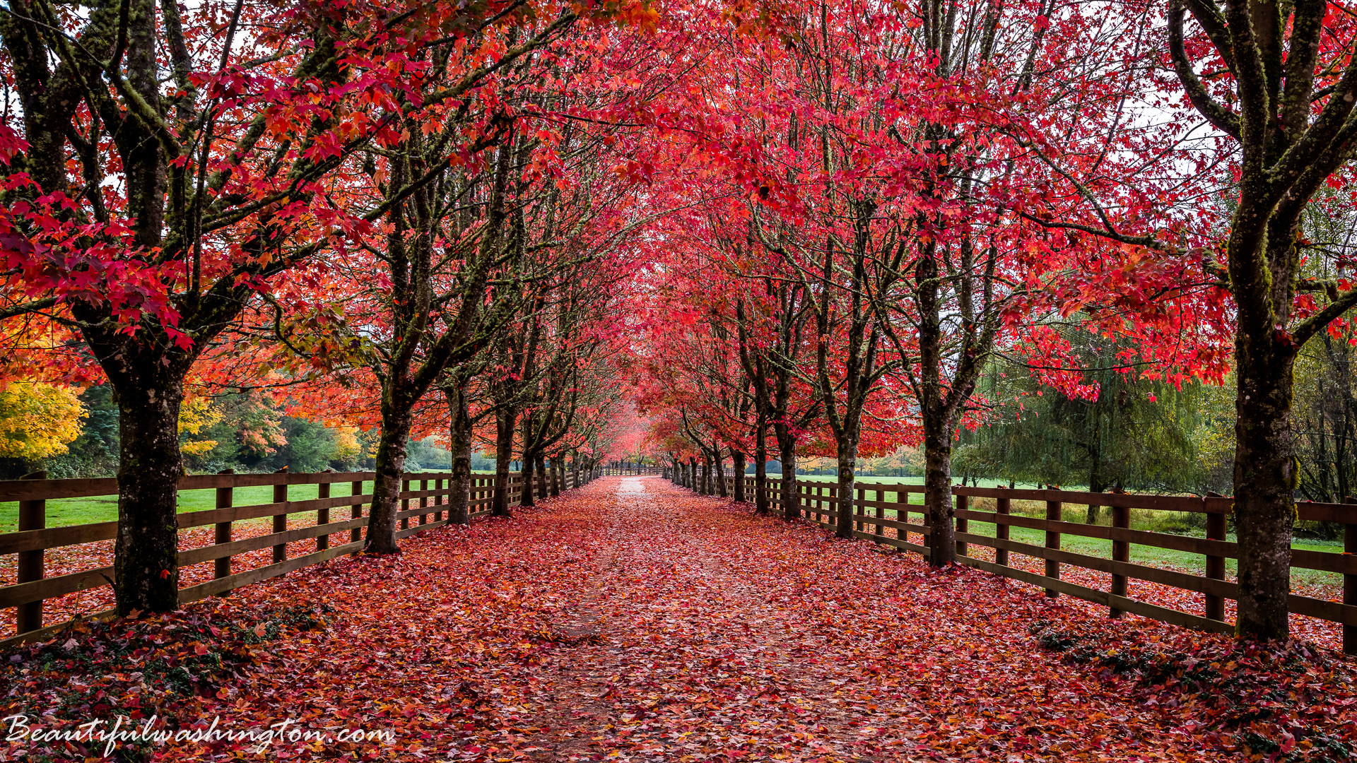 Fall Leaves Wallpaper Free Amazing Washington 5 Fall Foliage In Washington State