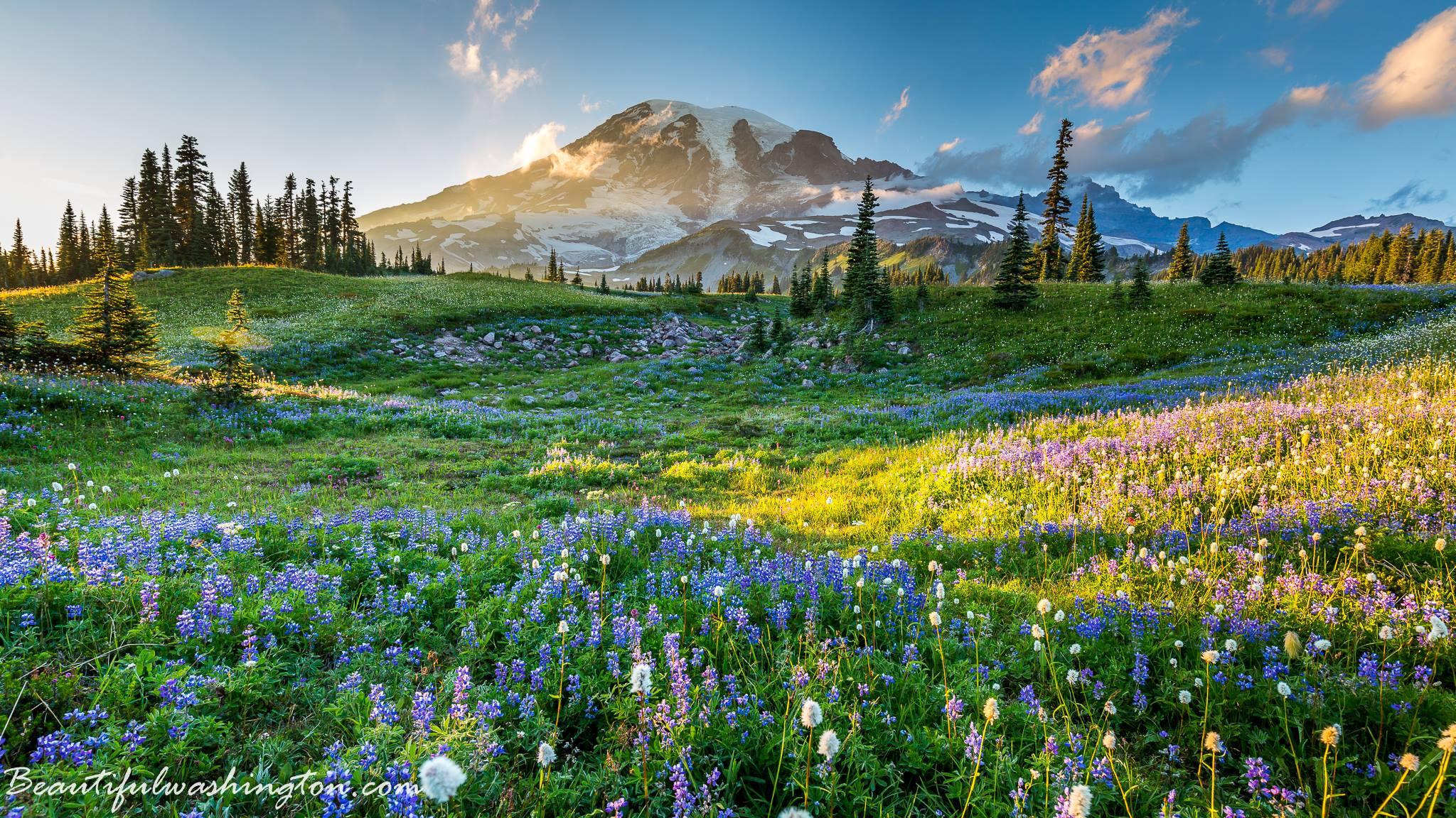 Seattle Washington Fall Skyline Wallpaper Mount Rainier Of Washington State Travel Guide