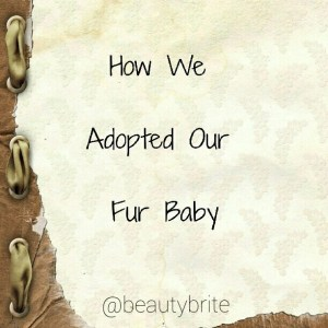 How We Adopted Our Fur Baby