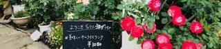 愛知県江南市 花と緑のカフェ ギャラリー喫茶