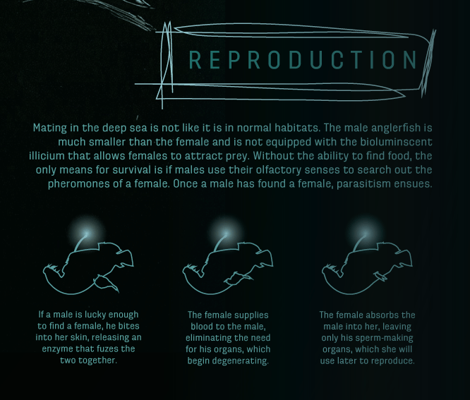 angler-reproduction