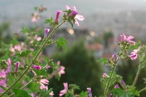 Sarajevo - White Fortress