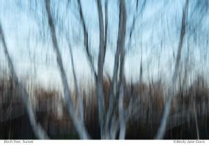 Birch Tree, Sunset