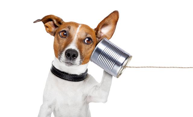 bee-agence-web-et-de-communication