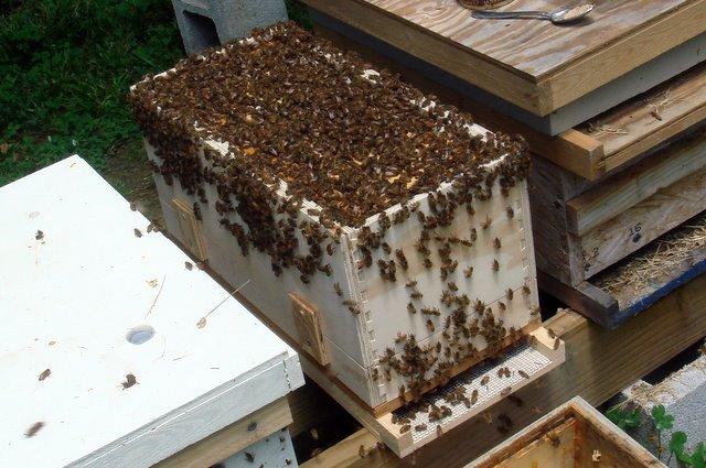 أهداف فحص طوائف النحل أو الكشف عليها