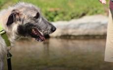 Dogs & Brews 2015 Video Recap