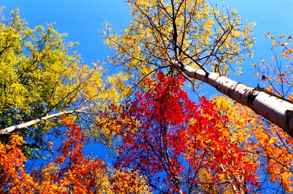 Fall Blessings Wallpaper Guide To Fall Colors Being Good At Being Poor