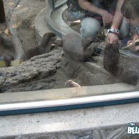 Playing with the otters
