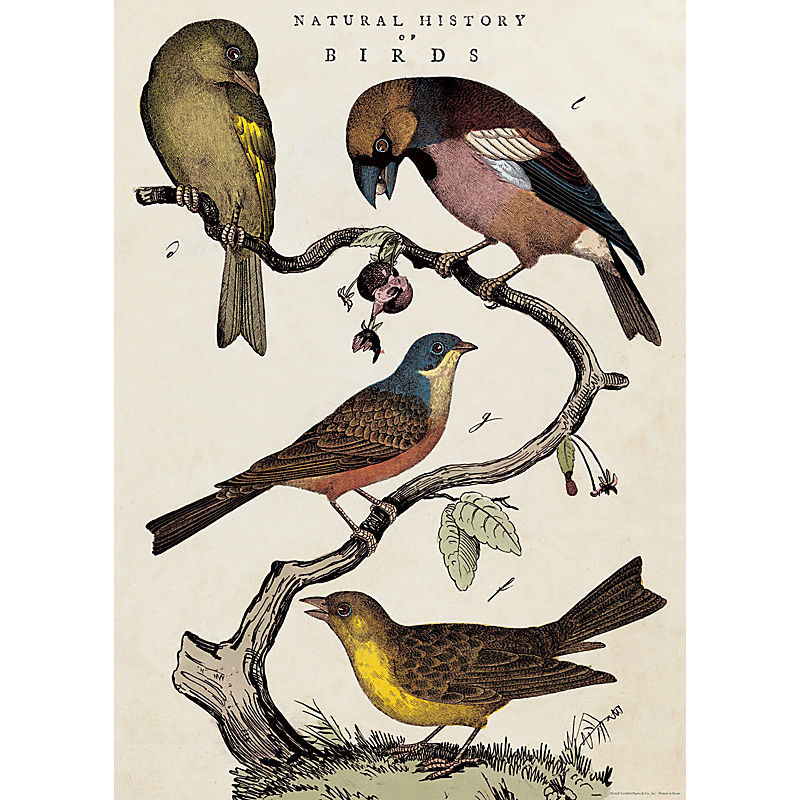 Cavallini & Co Natural History Birds
