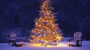 1387541801_new_year_wallpapers_new_year_tree_in_a_middle_of_the_forest_050566_