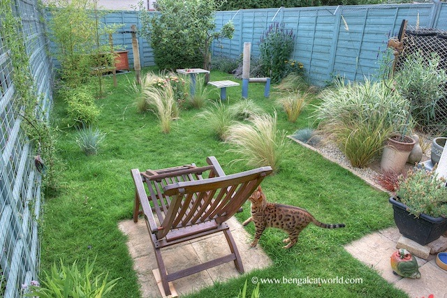 Five Ways To Let Your Cat Outside Safely Bengal Cat World