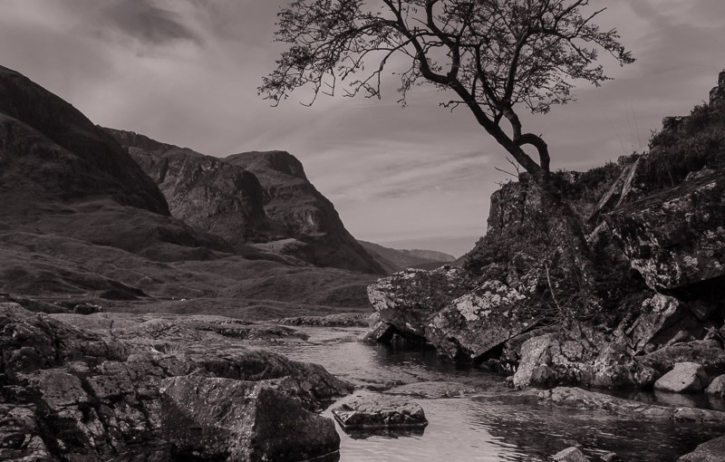 The Lone Tree of Glencoe