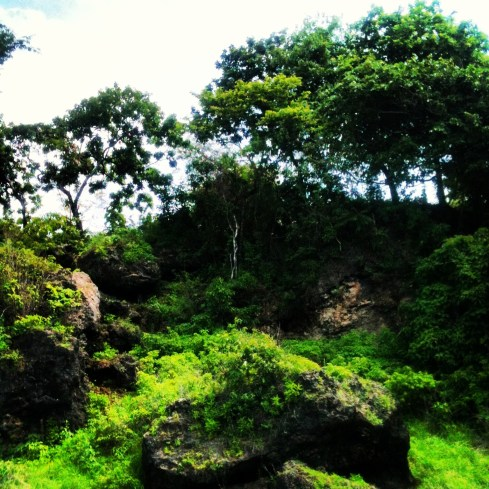 The hills and forests surrounding the island reminded me of Pandora.