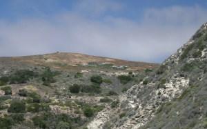 Low-lying pens left over from the island fox captive breeding program of the mid-2000s, Santa Rosa Island. (Levi Gadye)