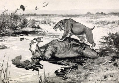 This imagined scene shows a saber-toothed cat (Smilodon californicus, also known as the California State Fossil) challenging a pair of dire wolves (Canis dirus) over a carcass in La Brea some 23,000 years ago.