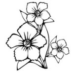 Mewarnai Bunga
