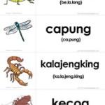 Flashcard Gratis: Serangga