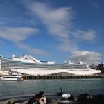Eher unübliches Verkehrsmittel im Hafen von Auckland.