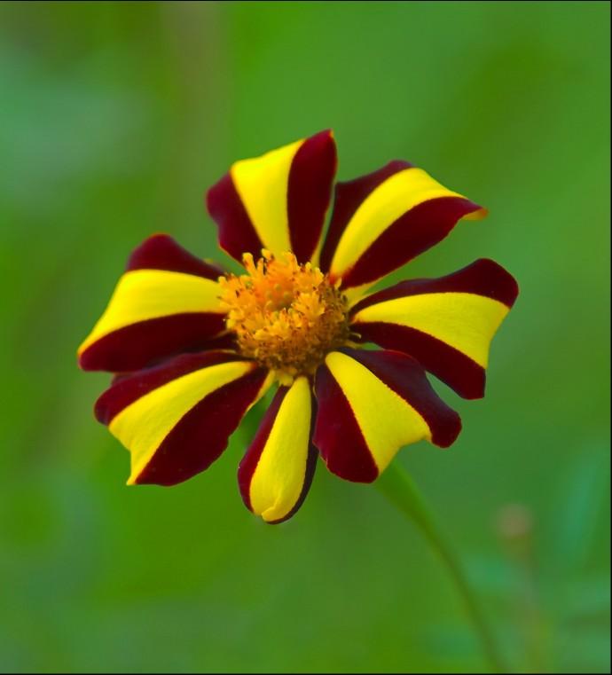 3d Rose Live Wallpaper Free Download تصاویر گل های زیبا 5