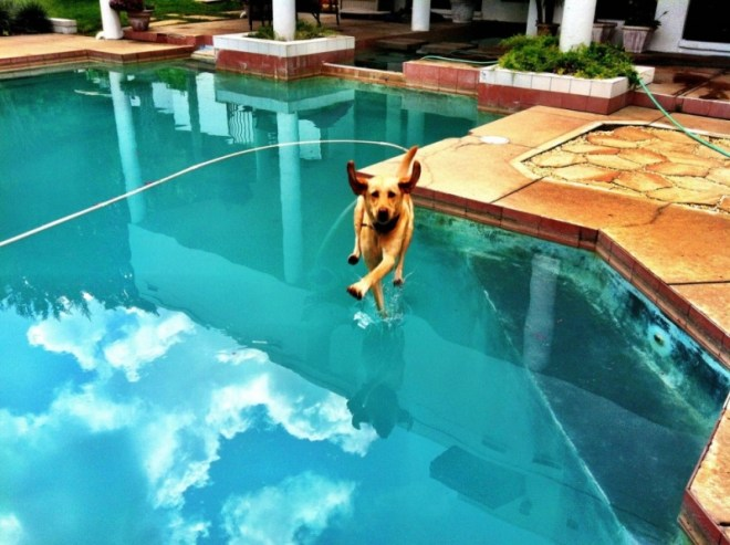 2474460-R3L8T8D-1000-perfectly-timed-dog-photos-a-31