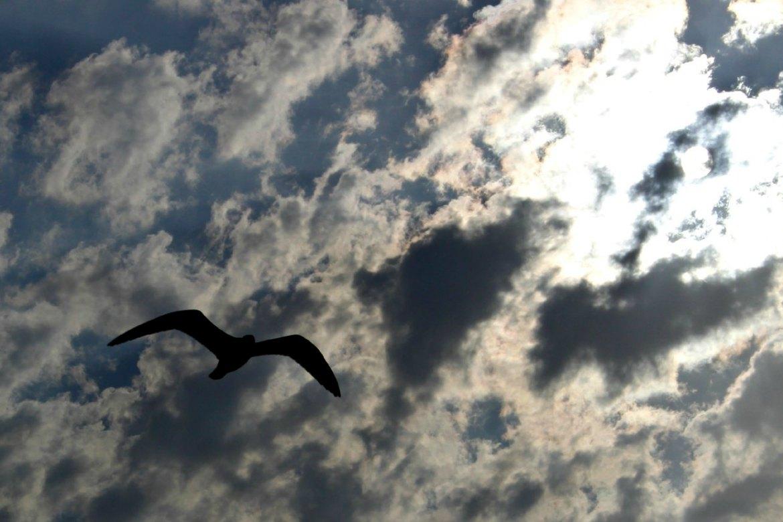 Vergesslichkeit Wolken