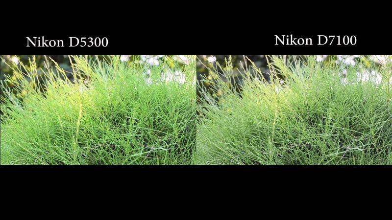 Large Of Nikon D5300 Vs D3300