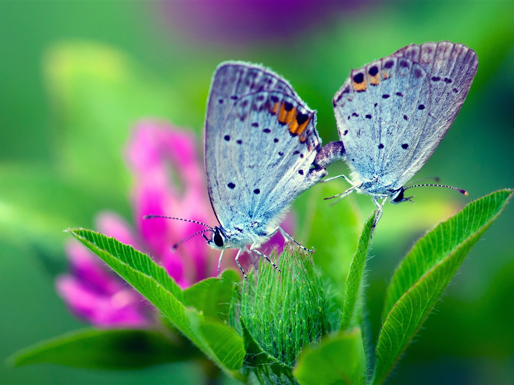 Peacock 3d Wallpaper Download Download Wallpaper 1024x768 Spring Nature Butterfly