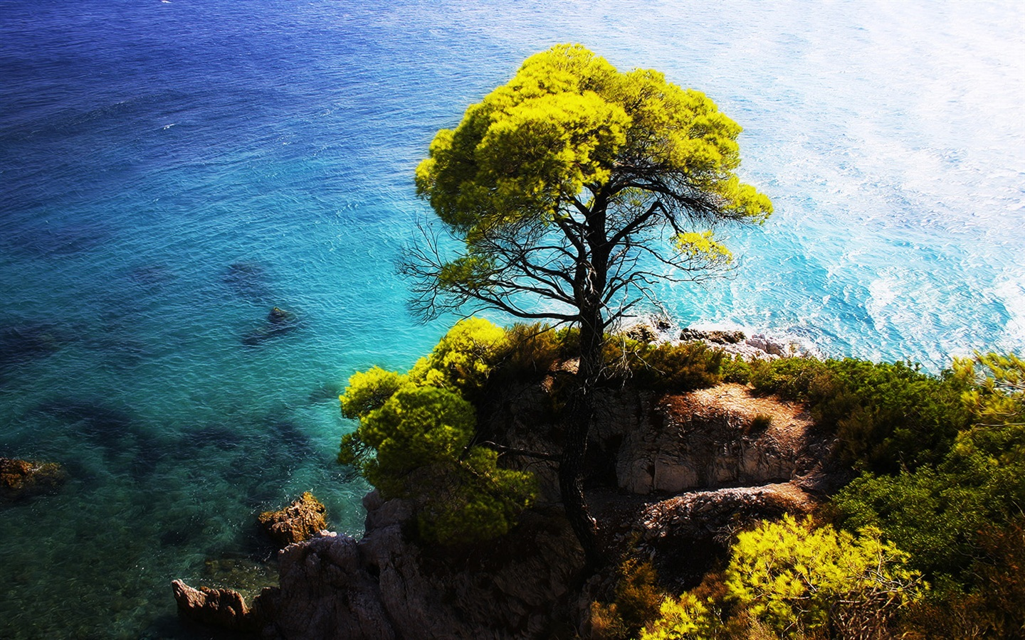 Wallpaper Blue Iphone X Wallpaper The Blue Sea Side Stands A Tree On The Cliff