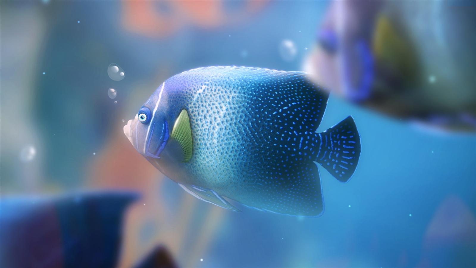 Iphone 5 Clown Fish Wallpaper Wallpaper Blue Aquarium Fish 2560x1440 Qhd Picture Image