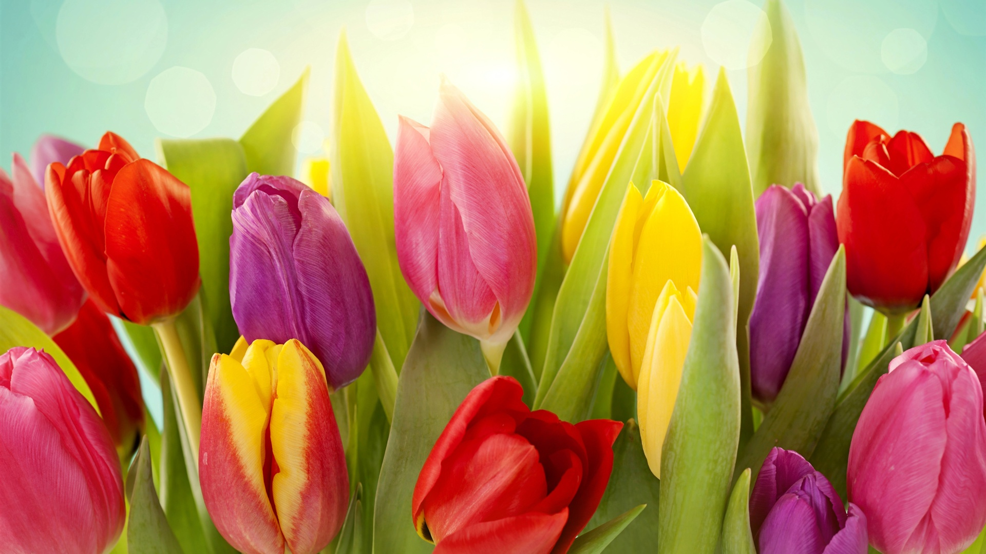 Best Car Wallpaper Download Wallpaper Different Colors Of Tulip Flowers 2560x1600 Hd