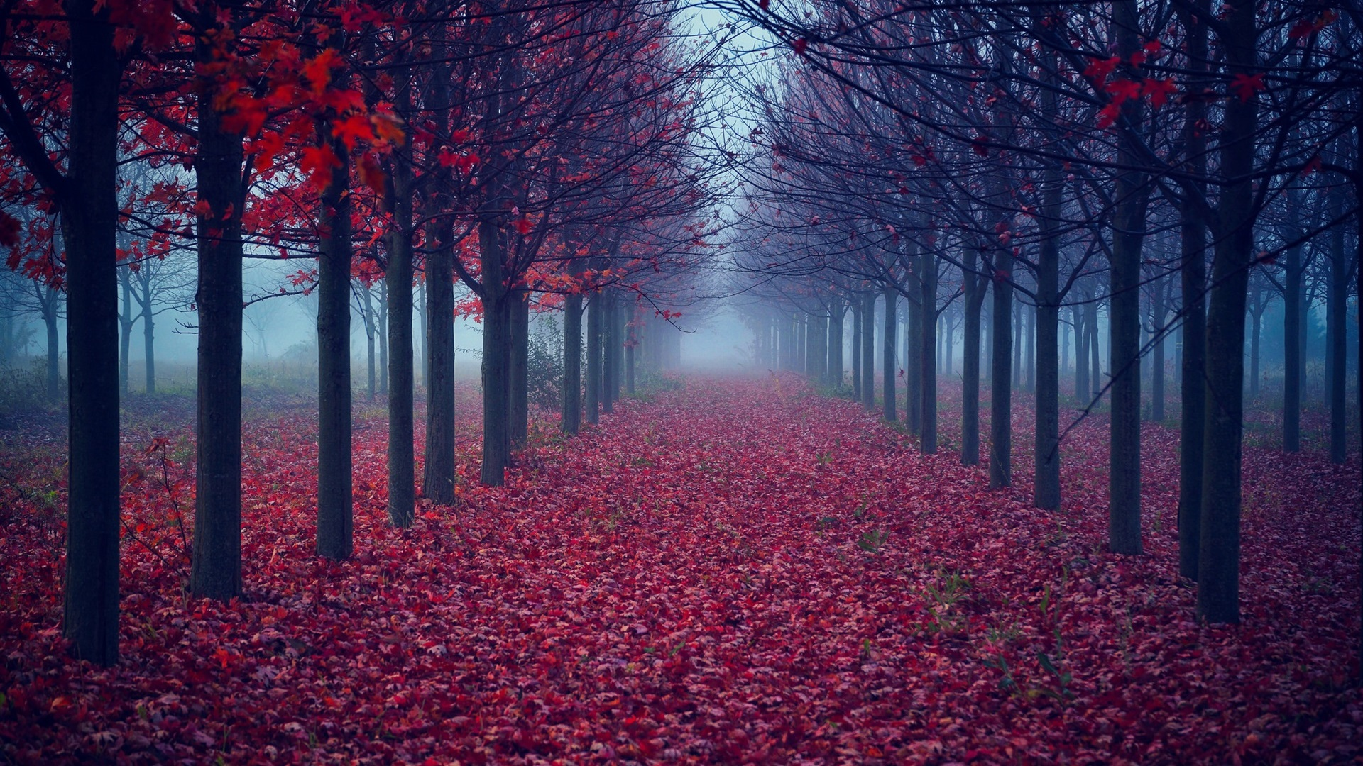 Fall Leaves Pathway Computer Wallpaper Wallpaper Trees Red Leaves Road Fog Autumn 1920x1200