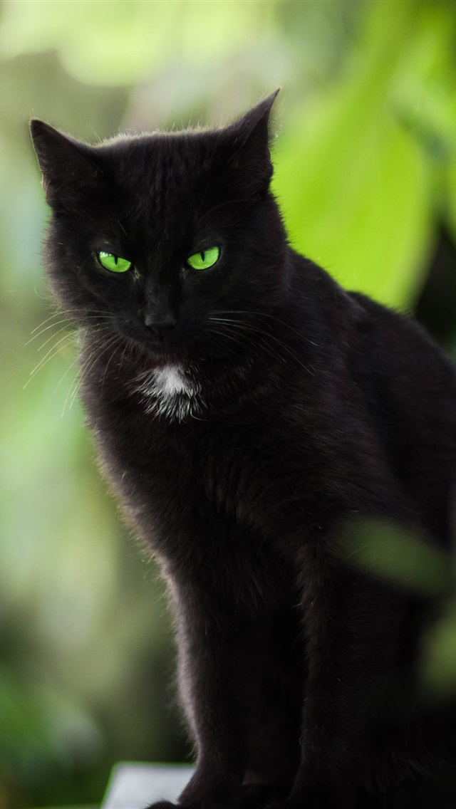 Iphone 4s White Wallpaper Wallpaper Black Cat Green Eyes 3840x2160 Uhd 4k Picture