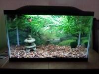 Asian Fish Aquarium Decor | Aquarium Design Ideas