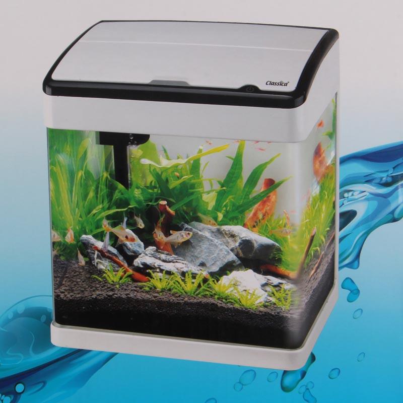 Small Aquarium Tropical Fish